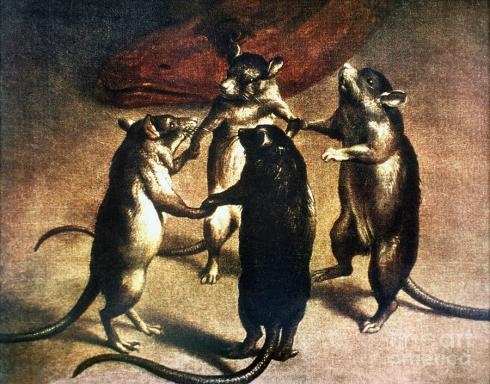 plague-dance-of-the-rats-granger