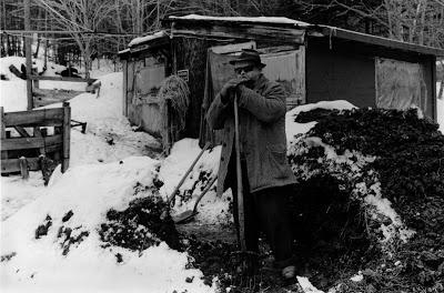 VT, guy shoveling manure