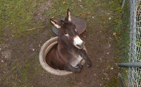 Donkey Sewer